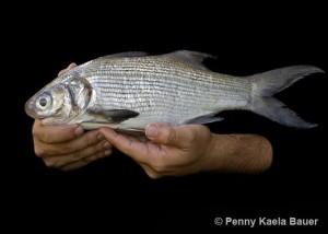 NM-fish