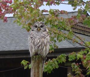 Even An Owl